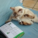Sudoku spelen